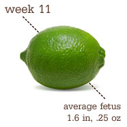 Week 11 Pregnancy Recap