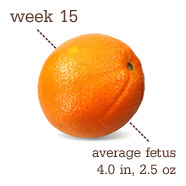 Week 15 Pregnancy Recap
